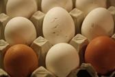 Kanapunkin jälkiä kananmunissa nettisivut